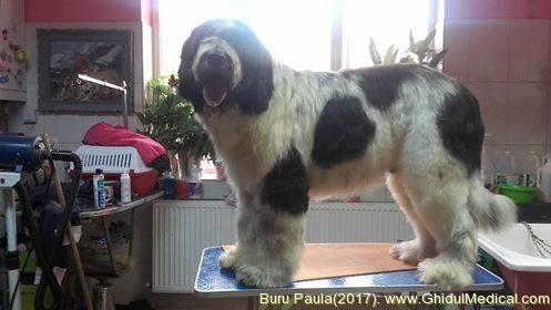 Buru Paulaburu Paula Cosmetica Caini Toaletare Caini Si Pisici In